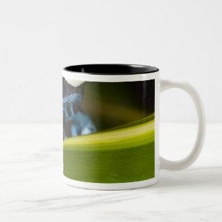 South America, Republic of Surinam. Close-up Two-Tone Coffee Mug
