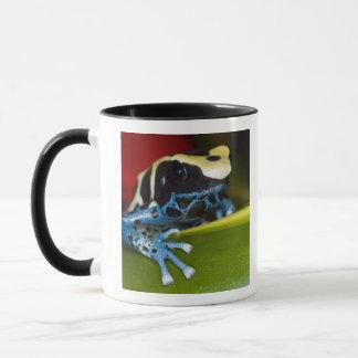 South America, Republic of Surinam. Close-up Mug