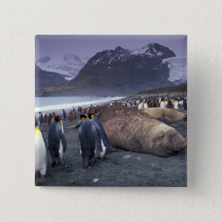 South America, South Georgia Island, Elephant 15 Cm Square Badge