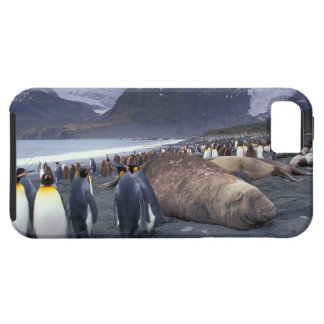 South America, South Georgia Island, Elephant iPhone 5 Case