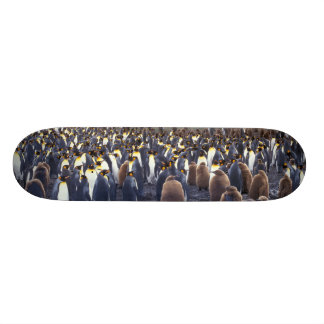 South America, South Georgia Island, King 18.1 Cm Old School Skateboard Deck