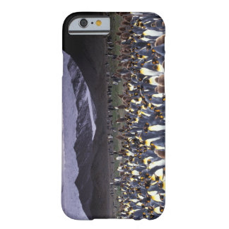 South America, South Georgia Island, King Barely There iPhone 6 Case