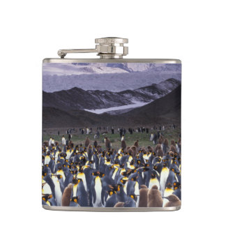 South America, South Georgia Island, King Hip Flask