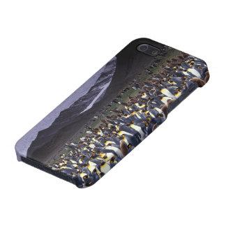 South America, South Georgia Island, King iPhone 5 Covers