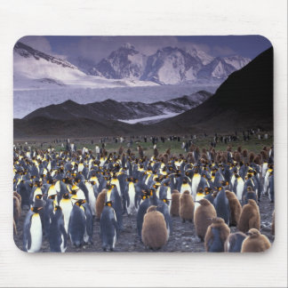 South America, South Georgia Island, King Mouse Pad