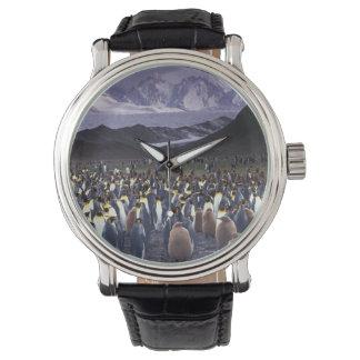South America, South Georgia Island, King Wrist Watch