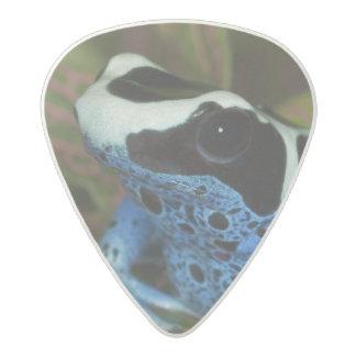 South America, Surinam. Close-up of Patricia Acetal Guitar Pick
