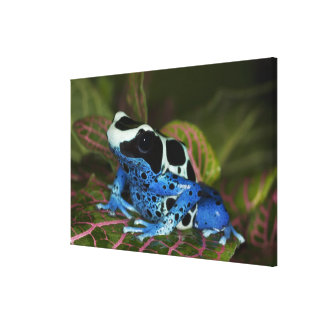 South America, Surinam. Close-up of Patricia Canvas Print