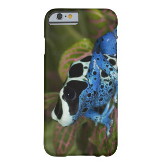South America, Surinam. Close-up of Patricia Barely There iPhone 6 Case
