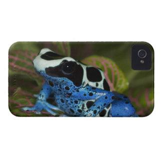South America Surinam Close-up of Patricia Blackberry Bold Case