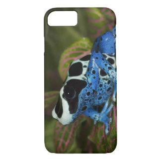 South America, Surinam. Close-up of Patricia iPhone 8/7 Case