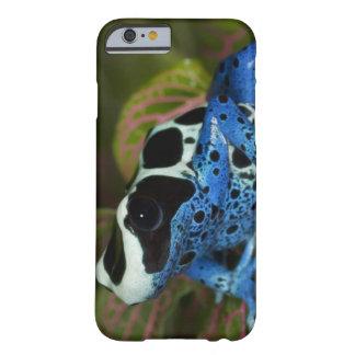 South America Surinam Close-up of Patricia iPhone 6 Case