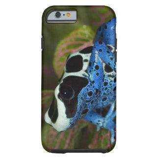South America, Surinam. Close-up of Patricia Tough iPhone 6 Case