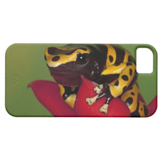 South America, Venezuela. Close-up of iPhone 5 Covers