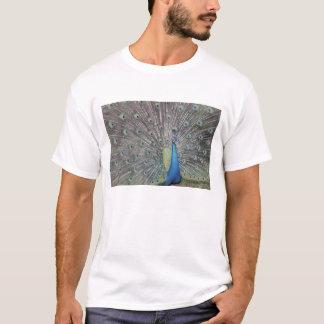 South America, Venezuela,  Peacock displaying T-Shirt