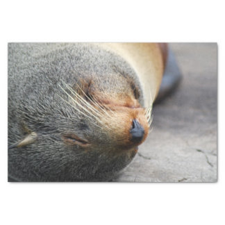South American Fur Seal Tissue Paper