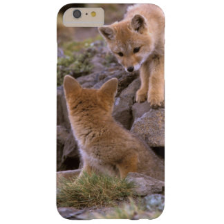 South American Gray Fox (Lycalopex griseus) pair Barely There iPhone 6 Plus Case