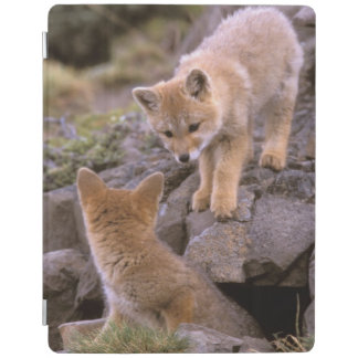 South American Gray Fox (Lycalopex griseus) pair iPad Cover