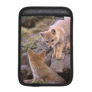 South American Gray Fox (Lycalopex griseus) pair iPad Mini Sleeve