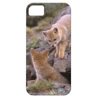 South American Gray Fox (Lycalopex griseus) pair iPhone 5 Covers