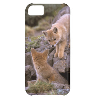 South American Gray Fox (Lycalopex griseus) pair iPhone 5C Case