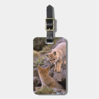 South American Gray Fox (Lycalopex griseus) pair Luggage Tag