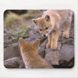 South American Gray Fox (Lycalopex griseus) pair Mouse Pad