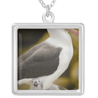 South Atlantic, Falkland Islands, New Island. 2 Silver Plated Necklace