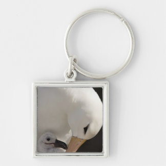 South Atlantic, Falkland Islands, New Island. Key Ring