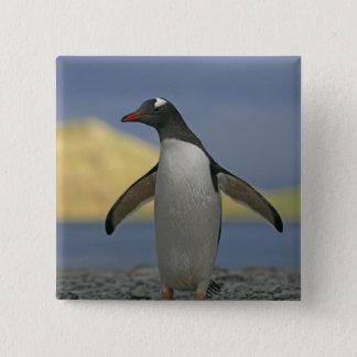 South Atlantic Ocean, South Georgia Island, 15 Cm Square Badge