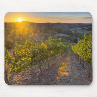 South Australia, Adelaide Hills, Summertown. Mouse Mat