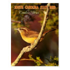 South Carolina State Bird: Carolina Wren Postcard