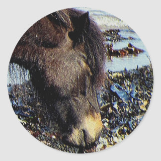 South Devon Beacg Dartmor Pony Enjoying Seaweed Round Sticker