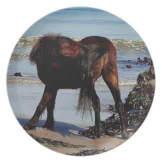 South Devon Beach Dartmoor Pony Biteing Tail Plate