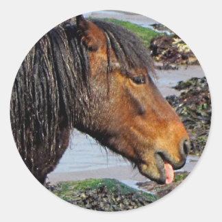 South Devon Beach Dartmoor Pony Enjoying Beach Round Sticker