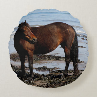 South Devon Beach Dartmoor Pony Looking Round Cushion