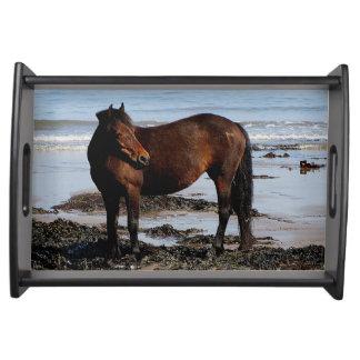 South Devon Beach Dartmoor Pony Looking Serving Tray