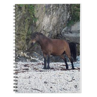 South Devon Beach Dartmoor Pony Near Rocks Notebooks