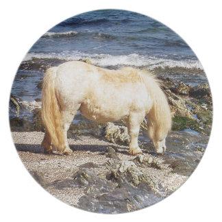 South Devon Beach Shetland Pony Eating Seaweed .2. Plate