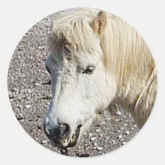South Devon Beach Shetland Pony Looking Round Stickers