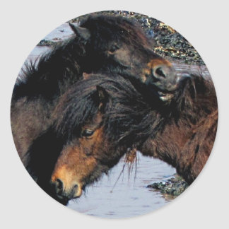 South Devon Beach Two Dartmoor Ponies Grooming Round Sticker