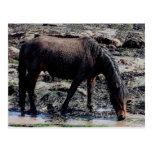 South Devon Beach Wet Looking Dartmoor Pony Postcards