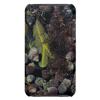 South Devon Coast Crowded Sea Life Rock Pool iPod Touch Case