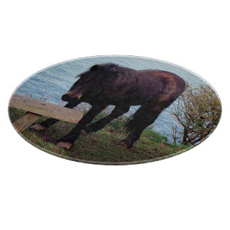 South Devon Coast Dartmoor Pony At Bench Cutting Board