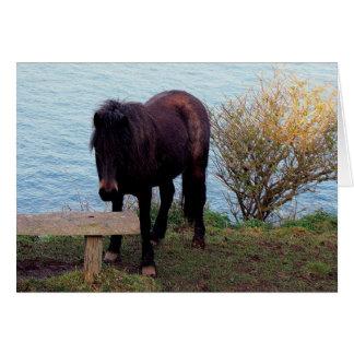 South Devon Coast Dartmoor Pony Looking At Bench Card