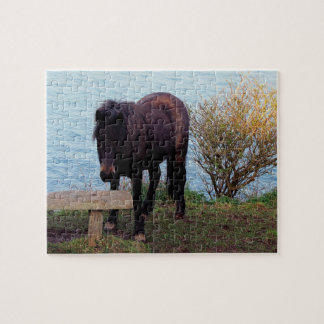 South Devon Coast Dartmoor Pony Looking At Bench Jigsaw Puzzle