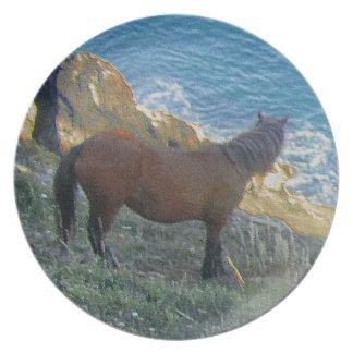 South Devon Coast Dartmoor Pony Looking At Sea Plate