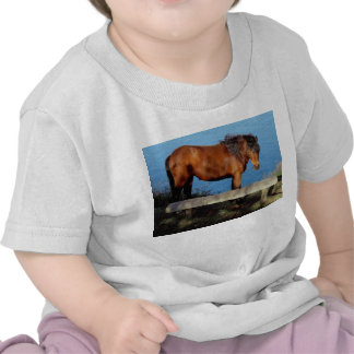 South Devon Coast Dartmoor Pony Near Bench .1 T Shirt