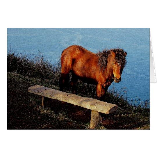 South Devon Coast Dartmoor Pony Near Bench .2. Card