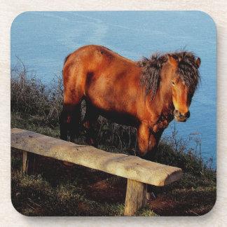 South Devon Coast Dartmoor Pony Near Bench .2. Coaster